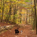 Woman playing with dog in fall forest. Photo by Colette Der Kinderen on Unsplash.